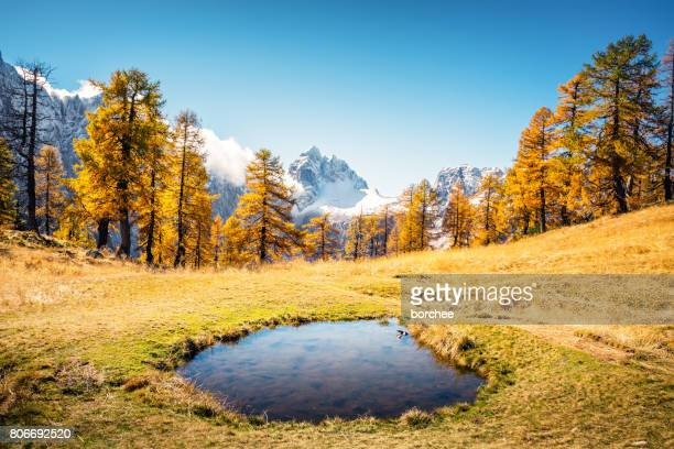 small lake in the mountains - larch tree stock pictures, royalty-free photos & images