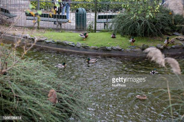 A small lake with ducks and other animals is seen in the capital of Piedmont in Northern Italy