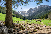 Small Meadow Valley in Tatra mountains, Poland