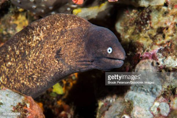 A small moray eel living on a coral reef.