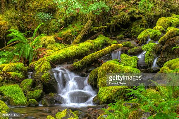 Small moss laden Stream Sol Duc Rainforest