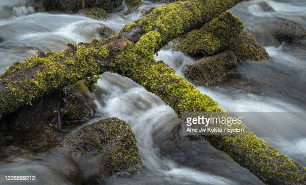 small moss-clad tree-trunk across a fresh stream flowing between moss-clad rocks - arne jw kolstø stock pictures, royalty-free photos & images