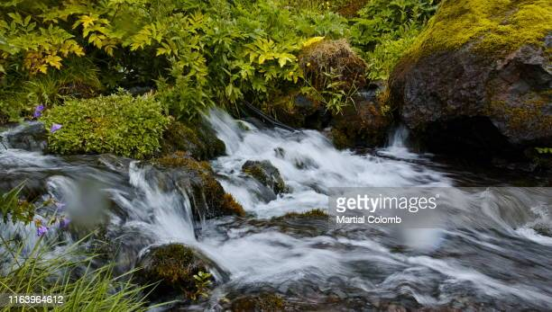 small mountain stream - martial stock pictures, royalty-free photos & images
