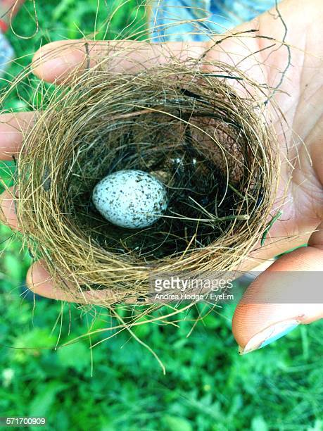 Small Nest With Egg In Hand