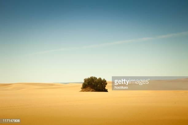 小さなオアシス、リビアサハラ砂漠