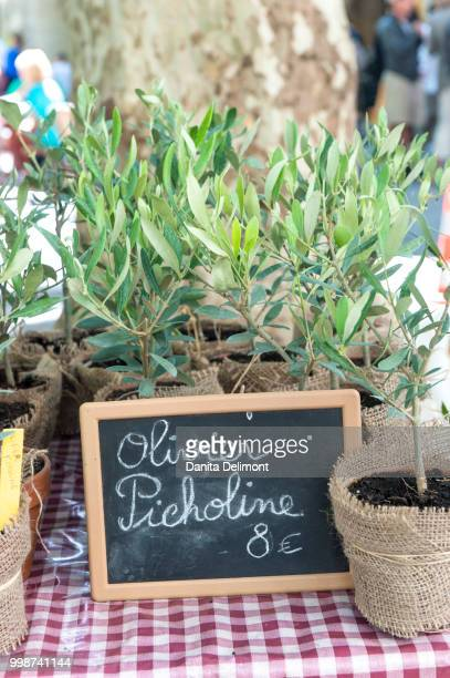 small olive trees for sale, uzes, provence, france - languedoc rousillon stock pictures, royalty-free photos & images