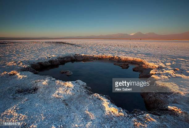 a small opening of water in the salar de atacama, chile. - alex saberi imagens e fotografias de stock