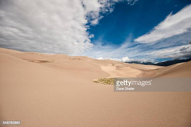 A small patch of grass finds a home in the Great Sand Dunes National Park
