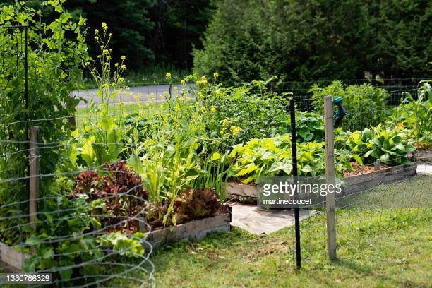 """small permaculture garden on parcel of land. - """"martine doucet"""" or martinedoucet stock pictures, royalty-free photos & images"""