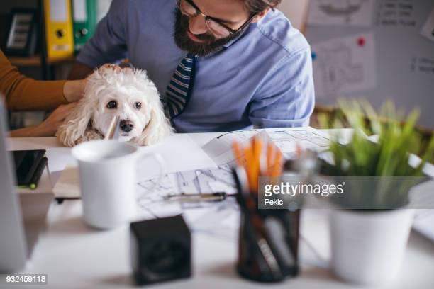 small pet friendly office - dog pad foto e immagini stock