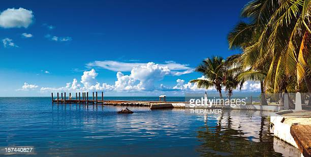 small pier and palm trees - key west stock photos and pictures