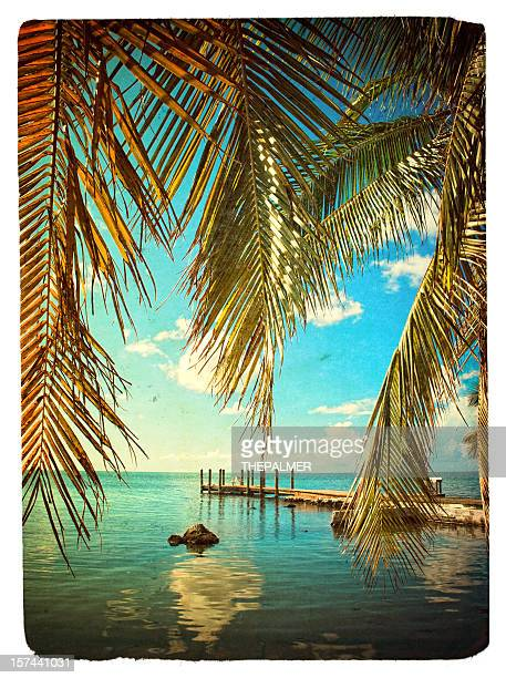 small pier and palm trees