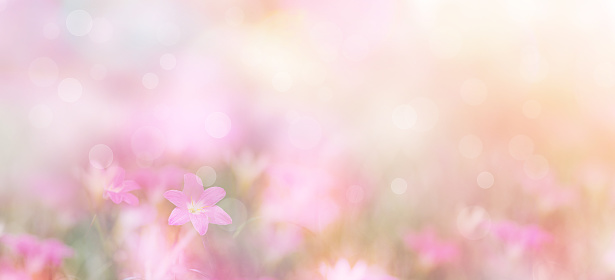 small pink flowers over pastel colors 1147335775