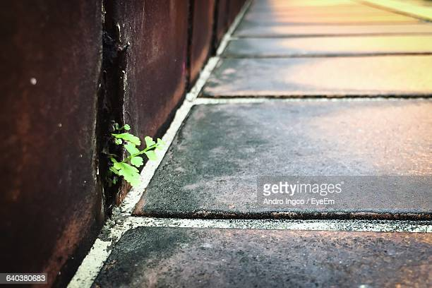 Small Plant Growing By Retaining Wall Along Footpath