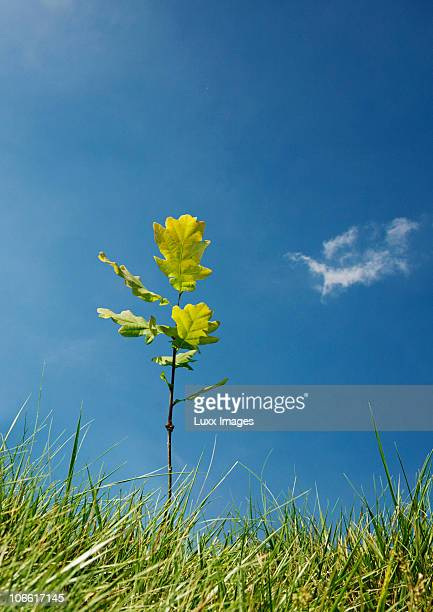 Small plant on horizon against blue sky