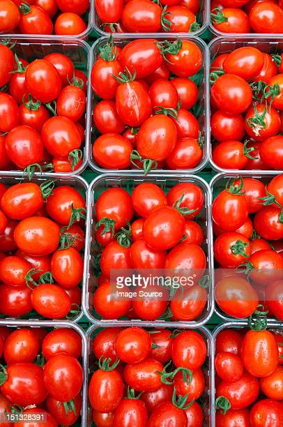 Small plum tomatoes in containers