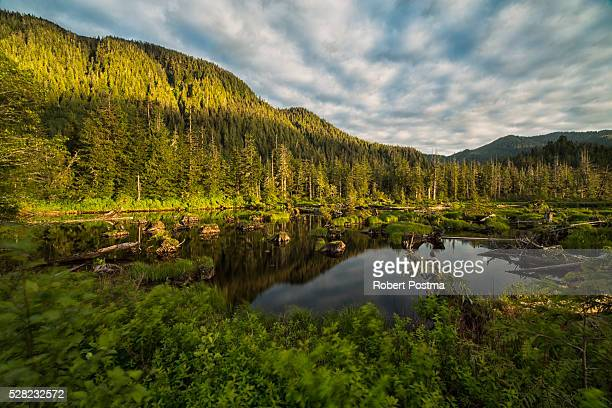 small pond near prince rupert being lit by the setting sun at sunset; british columbia, canada - canadian rockies stock pictures, royalty-free photos & images