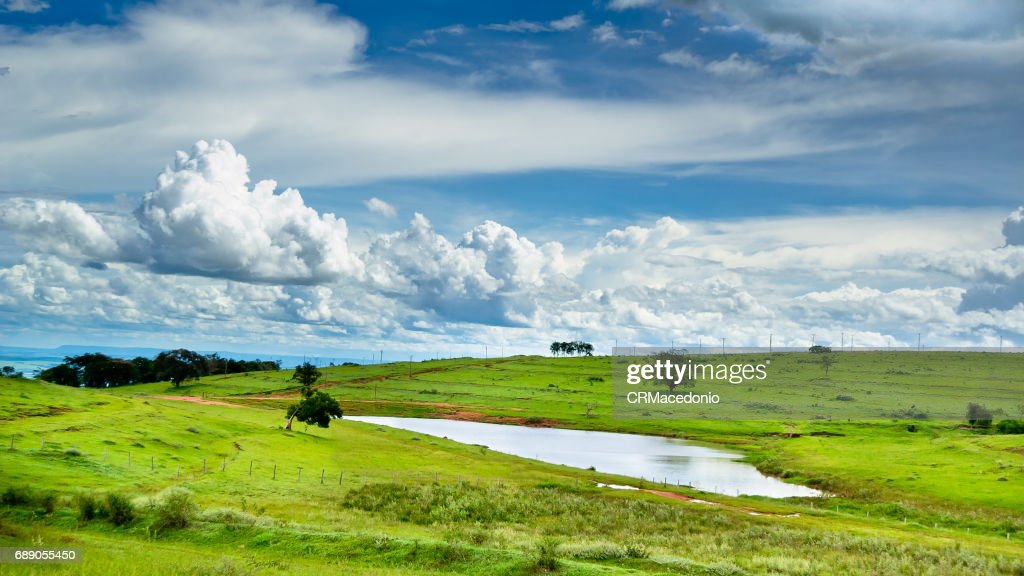 Small pond on the farm. : Stock Photo
