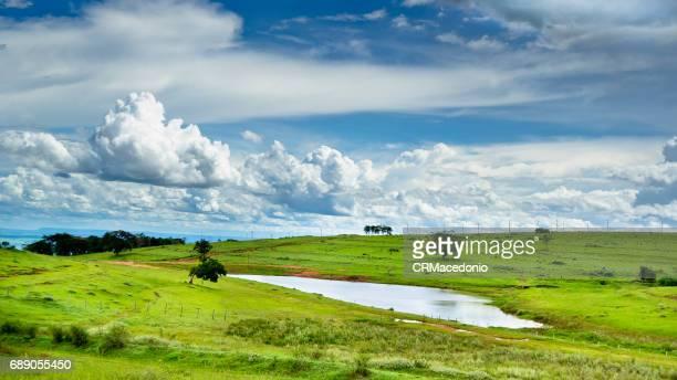 small pond on the farm. - crmacedonio - fotografias e filmes do acervo