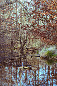 small pond surrounded by trees in autumn forest. magical feeling. Soft focus