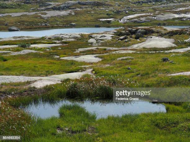 small ponds at gotthard pass, switzerland - bog stock photos and pictures