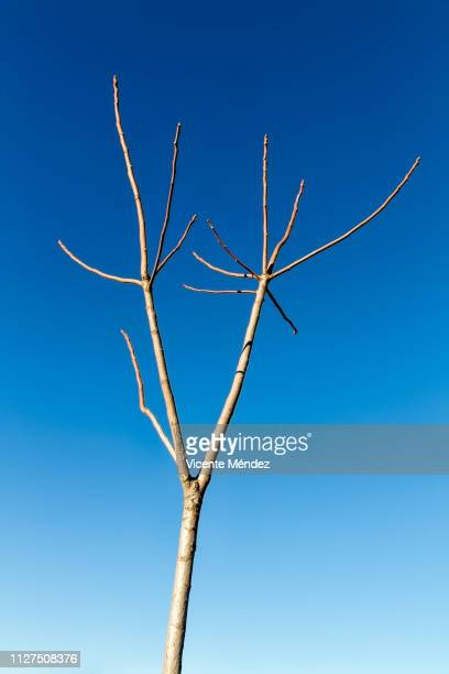Small pruned tree