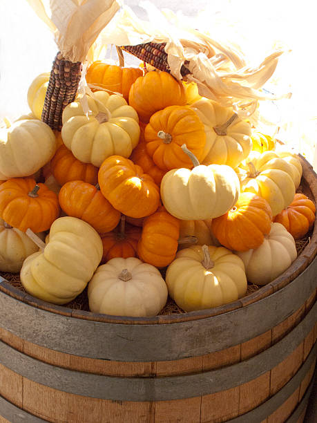 small pumpkins at a farm stand fine art prints photos com