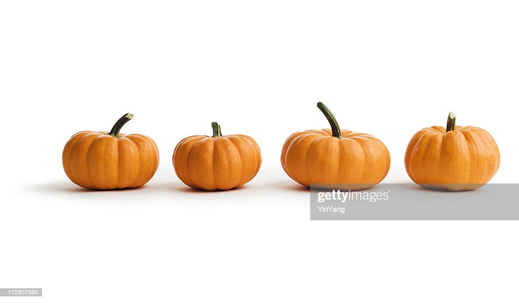 pumpkin stock photos and pictures