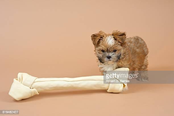 Small Puppy and Big Bone