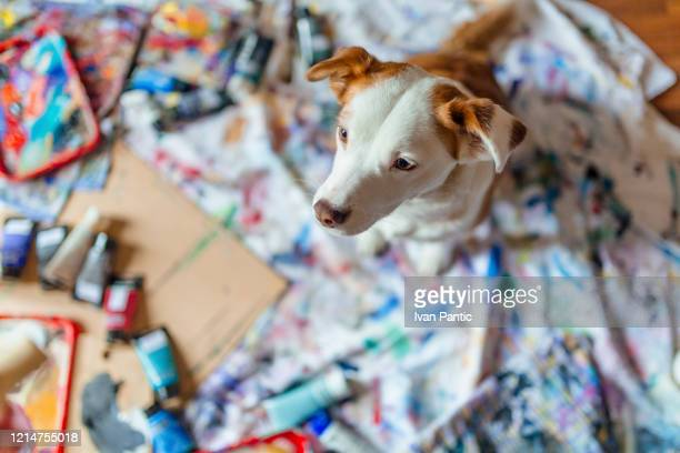 small puppy sitting - art and craft stock pictures, royalty-free photos & images