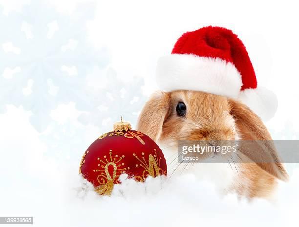 small rabbit wearing santa hat against winter background