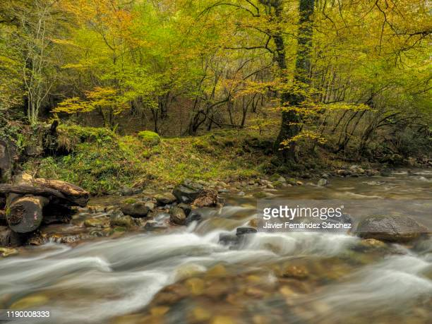 small rapids in a river framed with the colors of the forest in autumn, in the natural park saja-besaya, in cantabria. - カンタブリア ストックフォトと画像