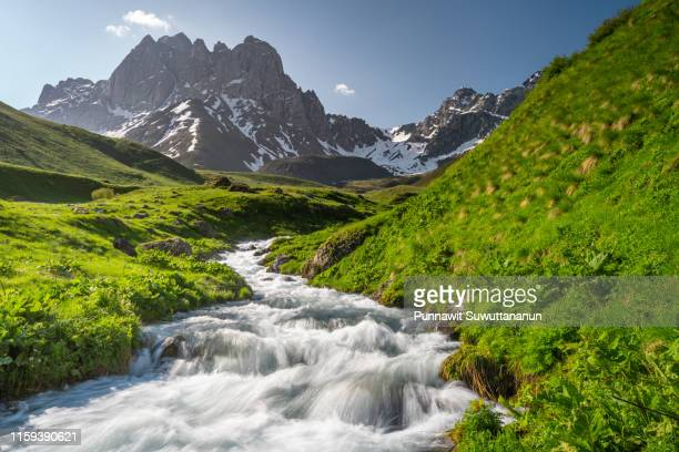 small river in juta valley in summer season in a morning, caucasus mountain range in georgia - valley stock pictures, royalty-free photos & images
