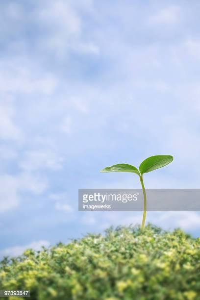 Small sapling against blue sky