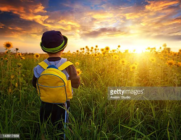 Small schoolboy in field with sunflowers
