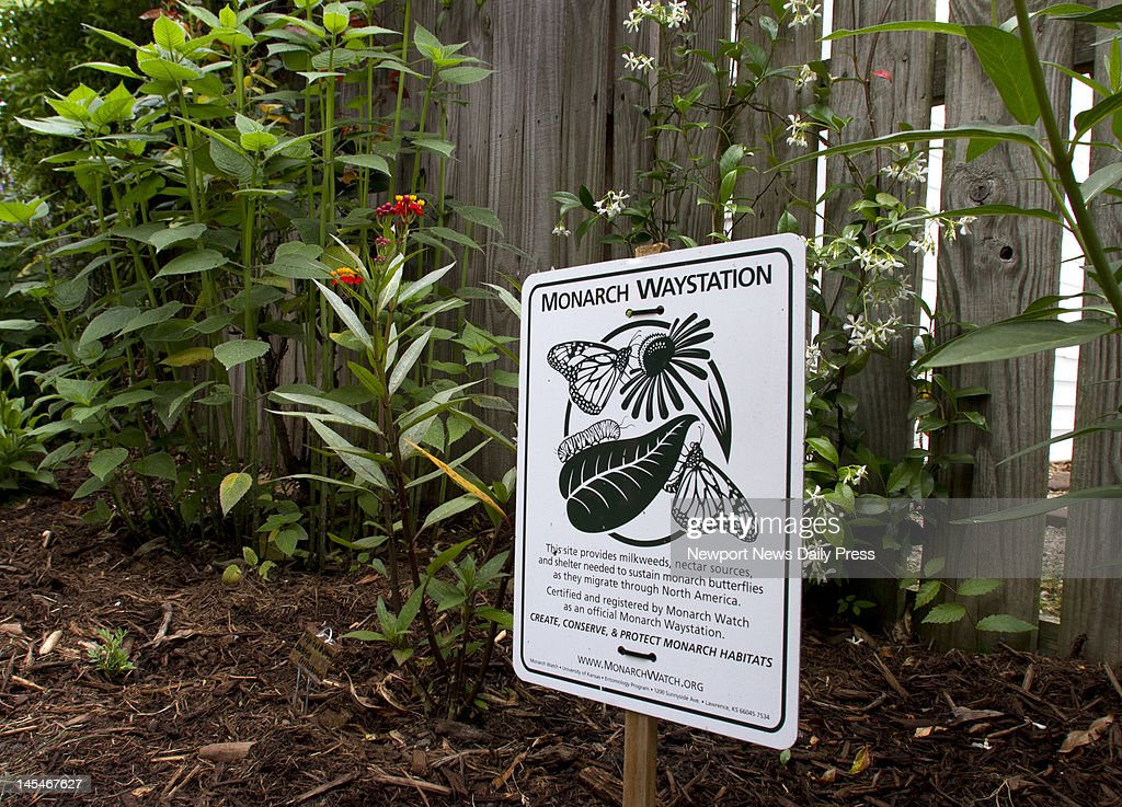A Small Sign In Susan Reaganu0027s Butterfly Garden Indicates Its Certification  As A Monarch Waystation In
