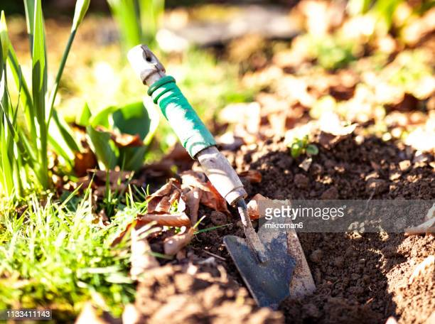 a small spade in soil in a garden - vegetable garden stock pictures, royalty-free photos & images