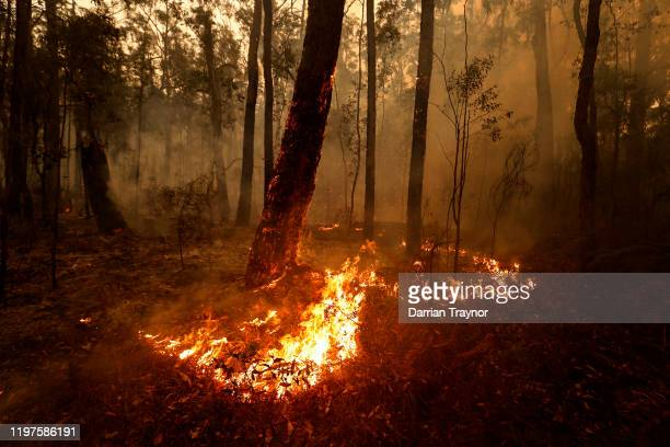 Small spot fires still burn on January 05 2020 between Orbost and Cann River along the Princes Highway Australia Two people are dead and 6 remain...