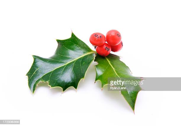 Small Sprig of Holly Berries and Leaves
