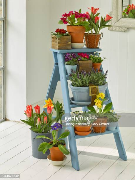 small step ladder  display of edible flowers in white washed room.