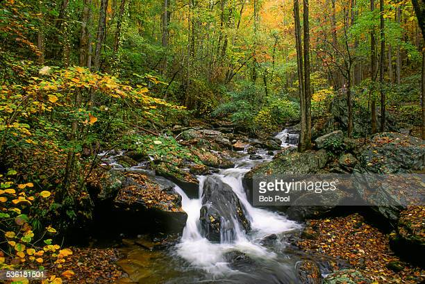 Small stream and waterfall in North Georgia