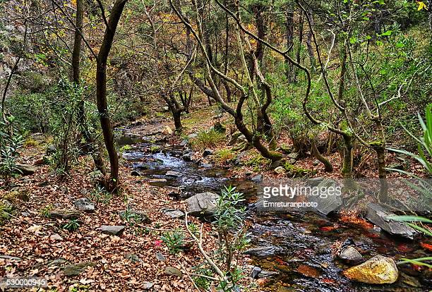 small stream flowing across the forest - emreturanphoto stock-fotos und bilder