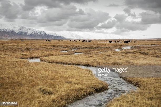 Small stream flowing through the grassland,Tashkurgan,China