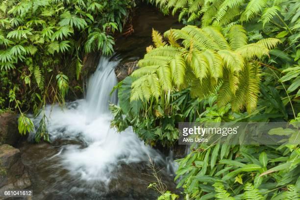 Small stream in Akaka Falls State Park, Hawaii