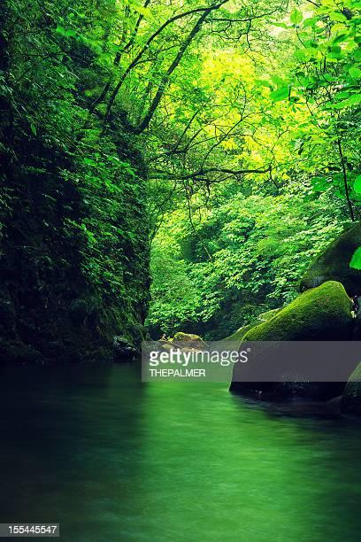 small stream in costa rica