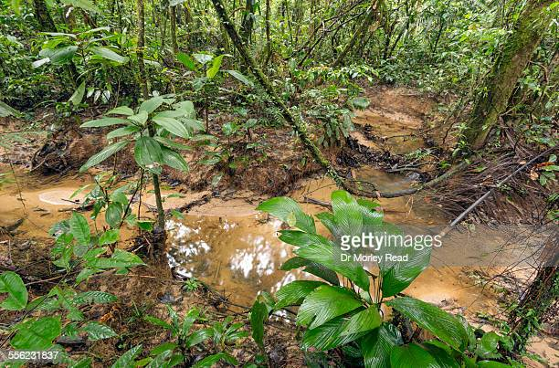 Small stream in the rainforest, Ecuador