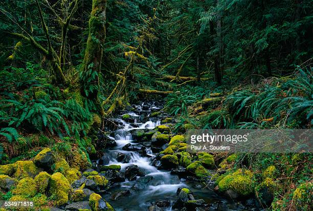 small stream lined with mossy rocks in the olympic national park - olympic park stock pictures, royalty-free photos & images