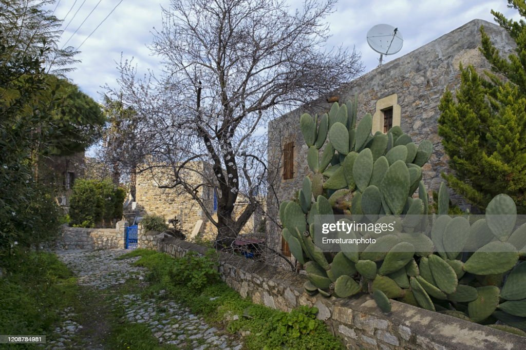 A small street with cactus plant and stone house,old Datca. : Stock Photo