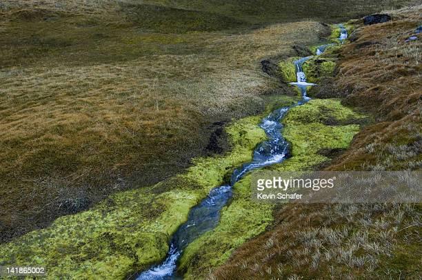 small summer stream running through meadows. grytviken area, south georgia island. sub-antarctic. december - sub antarctic islands stock photos and pictures