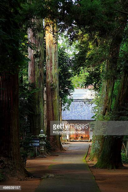 CONTENT] A small temple surrounded by monumental cedar trees in Togane